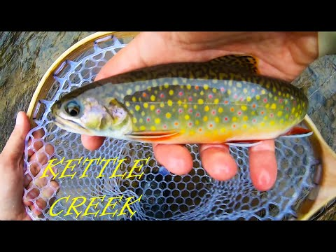 The Kettle Creek Experience - INCREDIBLE PA Native Brook Trout