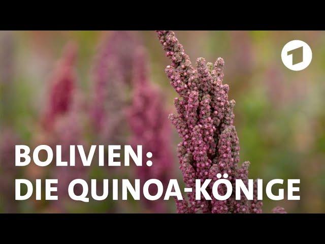 Quinoa-Bauern in Bolivien fühlen sich durch Superfood-Boom bedroht  | Weltspiegel-Reportage