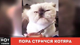 Врямя стрижки котяра... ( HOT VIDEOS | Смотреть видео HD )