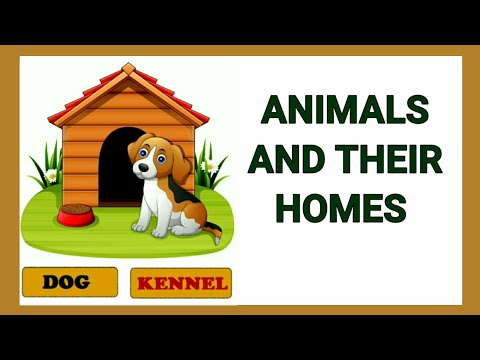 Animals and their homes   Animals home   Home of animals   Animal homes   Animal shelter for kids