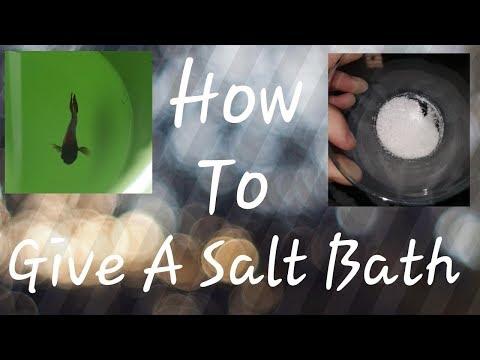 How To: Give Your Betta A Salt Bath!