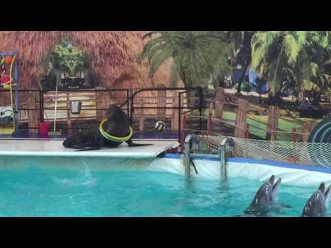 Дельфинарий в г  Назрань 1