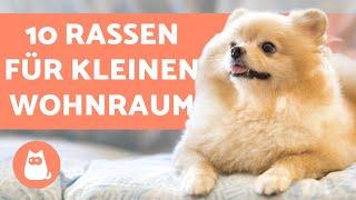 Hunde in der WOHNUNG halten  10 geeignete HUNDERASSEN
