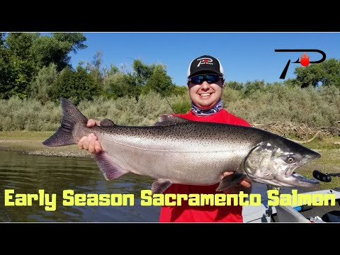 Early Season Sacramento River Salmon Fishing