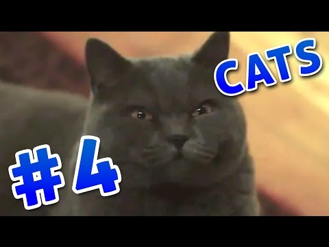 Funny video #4 - Cat Compilation 2016! Pikabuka coub fails