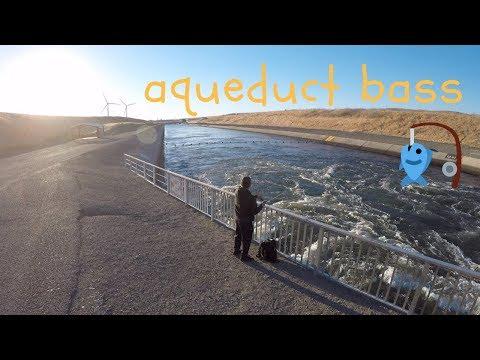 Striped Bass Fishing W/ Flukes   California Aqueduct
