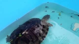 Great Indoor Tortoises & Turtles!