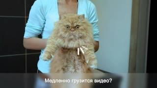 Как помыть кота при медленном интернете_1.mp4