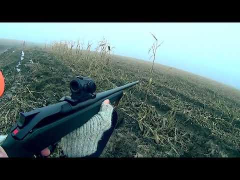 Roe Deer Driven Hunt In Poland 2018