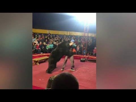 В Карелии медведь набросился на дрессировщика во время представления.