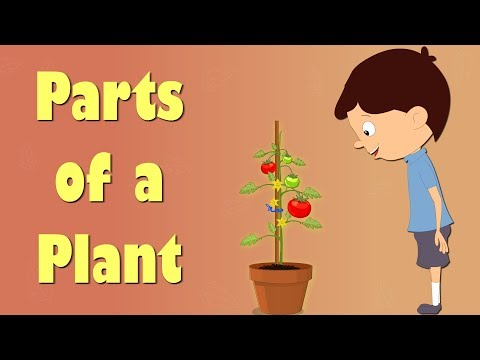 Parts of a Plant | Videos for Kids