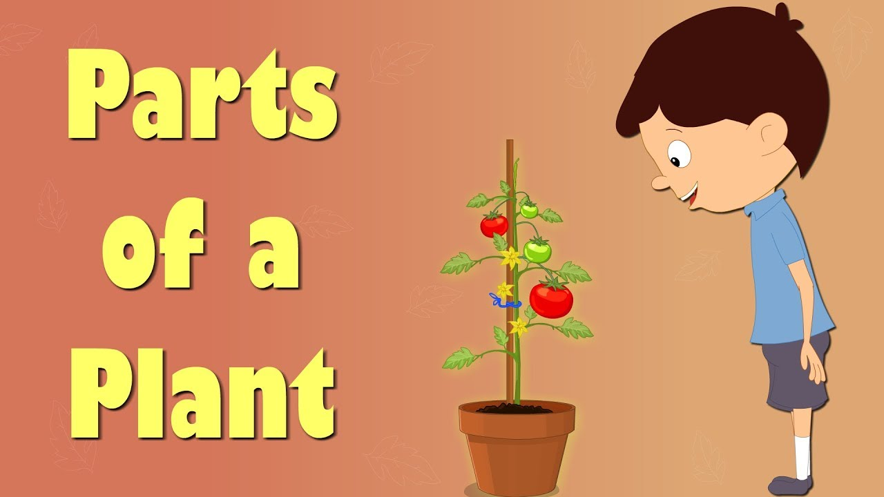 Parts of a Plant | Videos for Kids | #aumsum #kids #