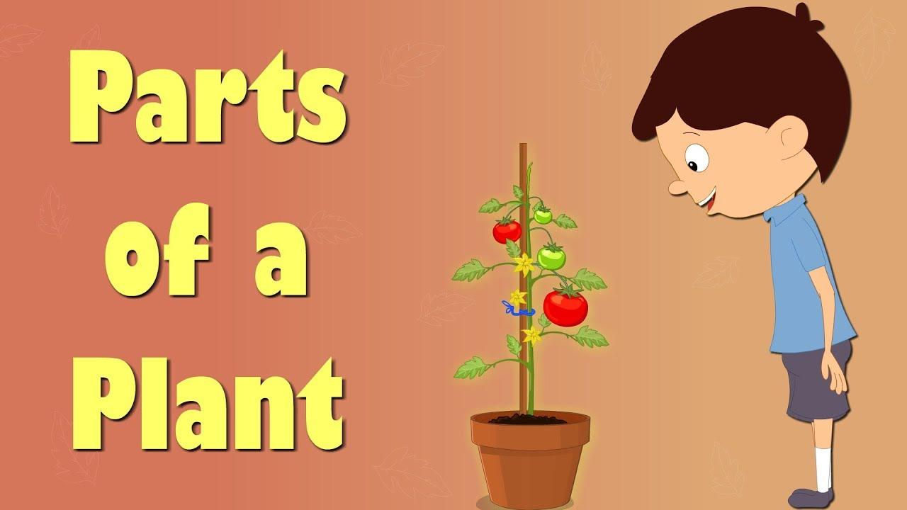 parts of a plant videos for kids aumsum kids education science plants [ 1280 x 720 Pixel ]