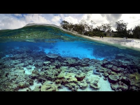 Great Barrier Reef gets 2nd consecutive bleaching