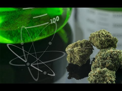 Cannabis Scientist Tells Us Why It's the Best Medicine
