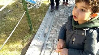 Teoman Dinazor Parkta Dinopark Konya 80 Binde Devri Alem - Dinosaur Park For T-r