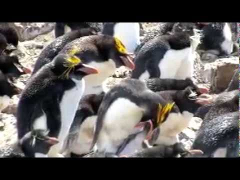 Tony Sandoval on The Breeze - Island Home to 5 Species of Penguins Is for Sale — and You Name the Price