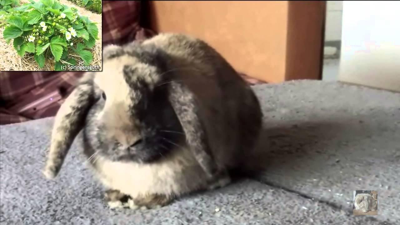 frischfutterliste f r kaninchen part 4 zweige bl tter youtube. Black Bedroom Furniture Sets. Home Design Ideas