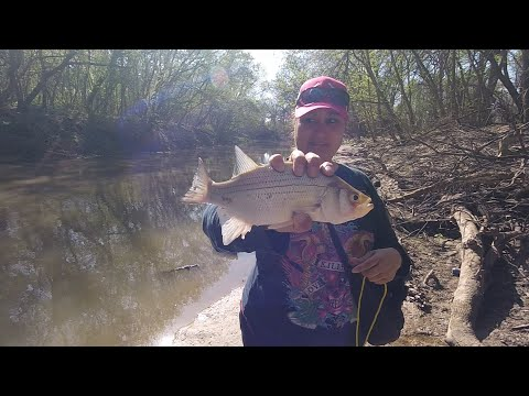 Catching White Bass And The Lures We Use