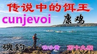 【磯釣】NO.19 MrXu 徐小董 悉尼矶钓之 传说饵Cunjevoi-康鸡试用 sydney fishing