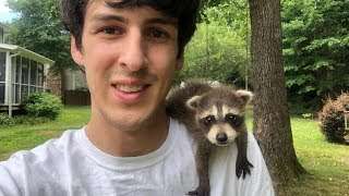 baby-raccoon-rescued-after-mom-was-hit-by-a-car