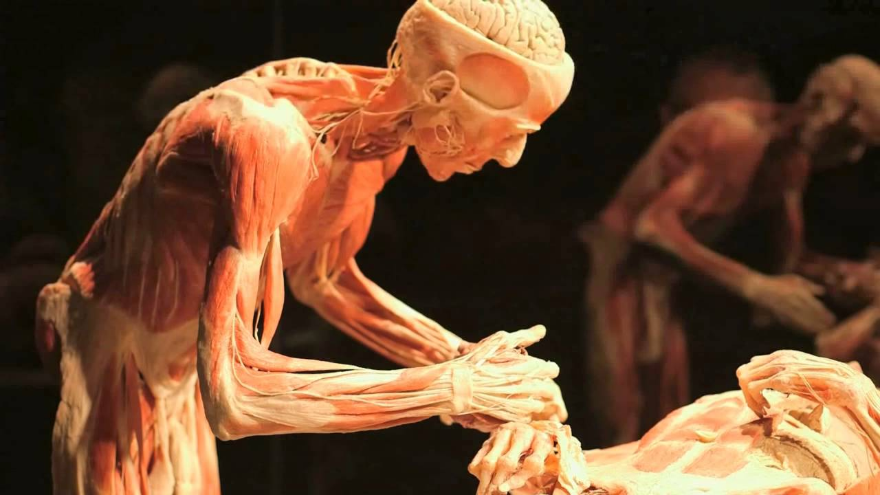 Body Worlds Exhibition Promotional Video Three Motion Youtube