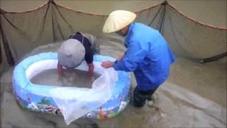 MARUSHIN Koi Farm Okt 2014 - Japan