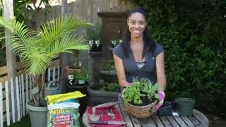 How to Create a Basic Herb Garden Plant Container : Herb Garden Tips