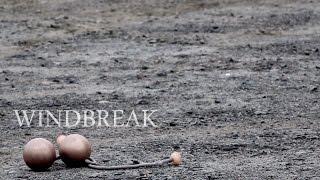 Windbreak | Timmehtek