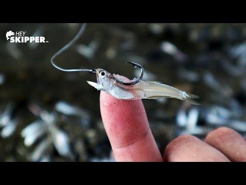 Fishing W/ Tiny Bait Fish Catches Every Species!