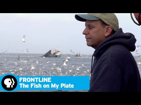 FRONTLINE | The Fish On My Plate - Preview | PBS