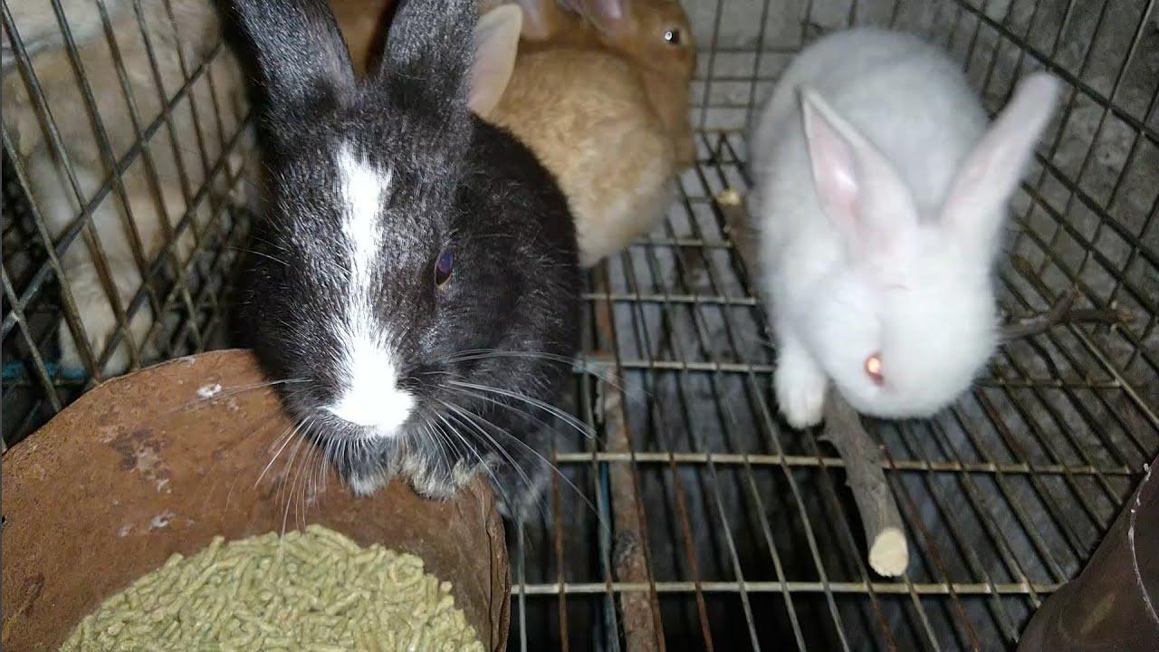 La mejor camada de conejos