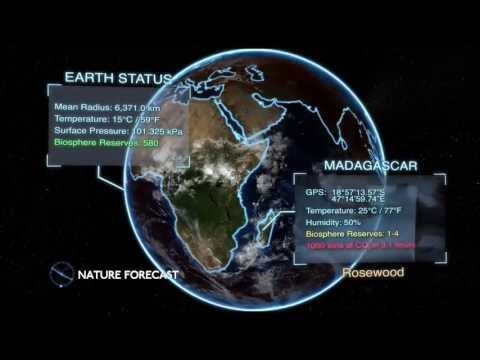 Nature Forecast - Madagascar Rosewood