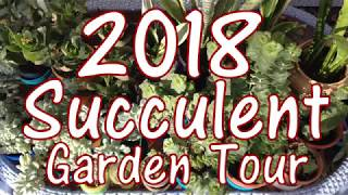 2018 Succulent Garden Tour & Propagation Tips