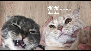 고양이에게 뽀뽀했을 때 반응
