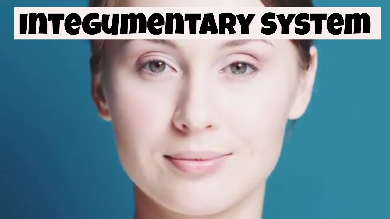Why The Integumentary System Is Important Skinnails And Hair