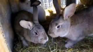 Кролиководство /обзор мини фермы/ часть 1
