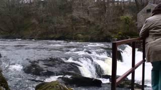 Cenarth Falls, Ceredigion