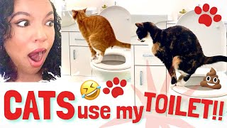 HOW TO TRAIN CATS TO USE YOUR TOILET | Say BYE to that smelly litter tray!!