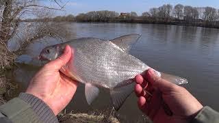 Рыбалка в апреле на фидер Ловля леща на фидер