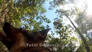 German Shepherd Search & Rescue Training