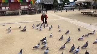 【インスタストーリー】村上虹郎 鳩との戯れ.