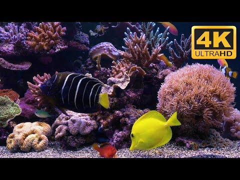 4K Marine Aquarium Screensaver with Nemo, Dory and friends