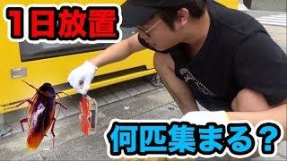 何匹集まる?大阪難波にゴキブリホイホイを1日放置した結果...【閲覧注意】 thumbnail