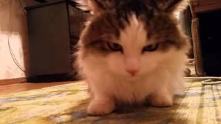 Голодный Кот Съел МУХУ / A hungry cat Ate a FLY (Приколы 2016 / Epic Fail))