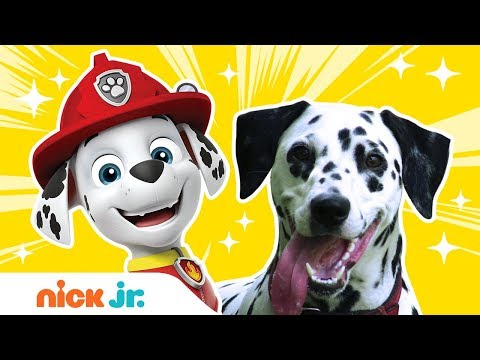 What Kind of Dogs & Birds Are The PAW Patrol & Top Wing Characters? | Nick Jr.