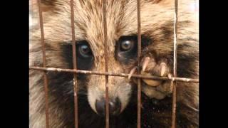 Geo Summative & Animal Rights Video - Chinese Fur Farms