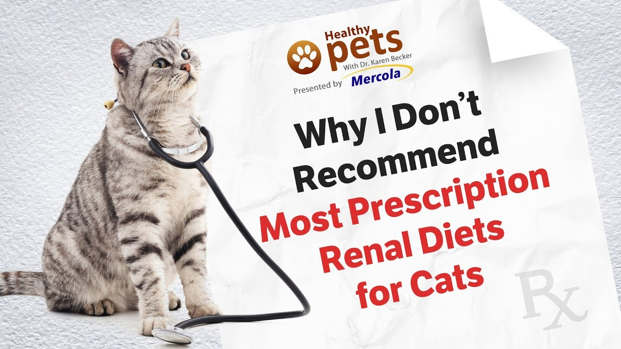 how do renal diets help cats with ckd