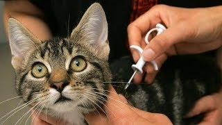 В Ханты-Мансийске назвали плюсы и минусы чипирования домашних животных