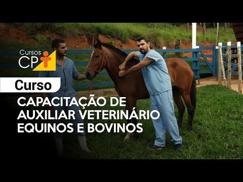 Curso Capacitação de Auxiliar Veterinário - Equinos e Bovinos